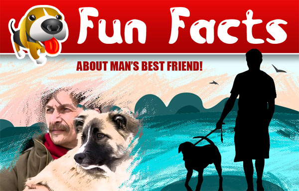 top of fun facts about man's best friend infographic