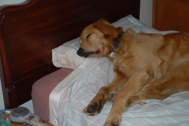 dog sleeping in bed
