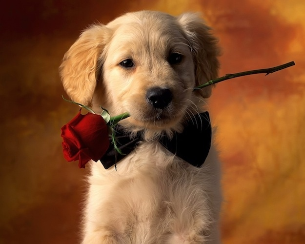 Top 25 Must See Valentine's Day Gifts For Your Dog