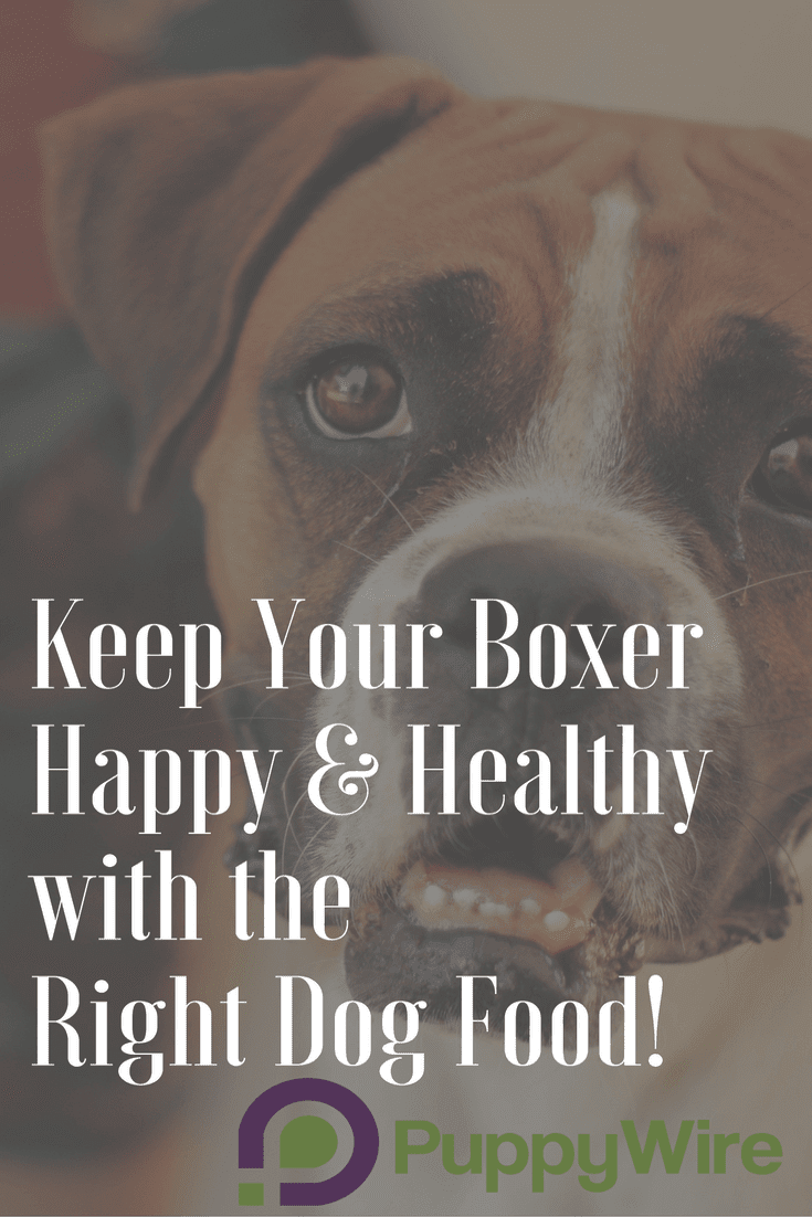 Finding the best dog food for Boxers can be hard. We help make it easier by giving you all the information you need to make a good choice. We cover ingredients to avoid, common Boxer health issues, our top 5 choices for Boxer dog food, and much more.