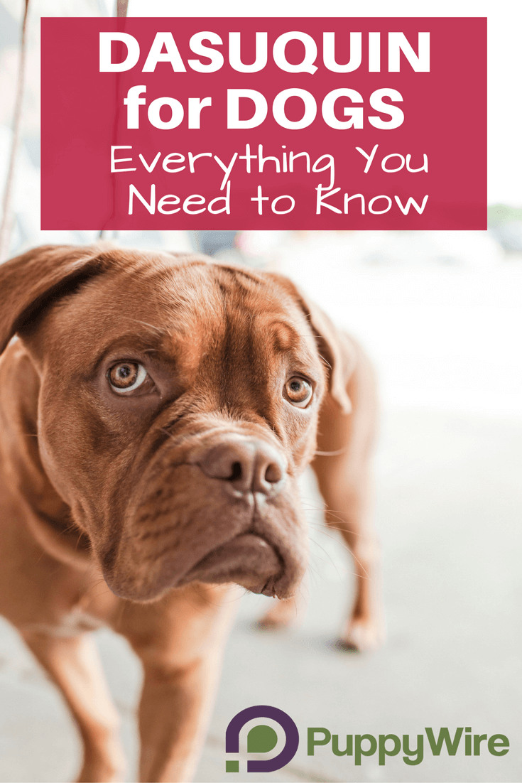 Dasuquin For Dogs Review Everything You Need To Know