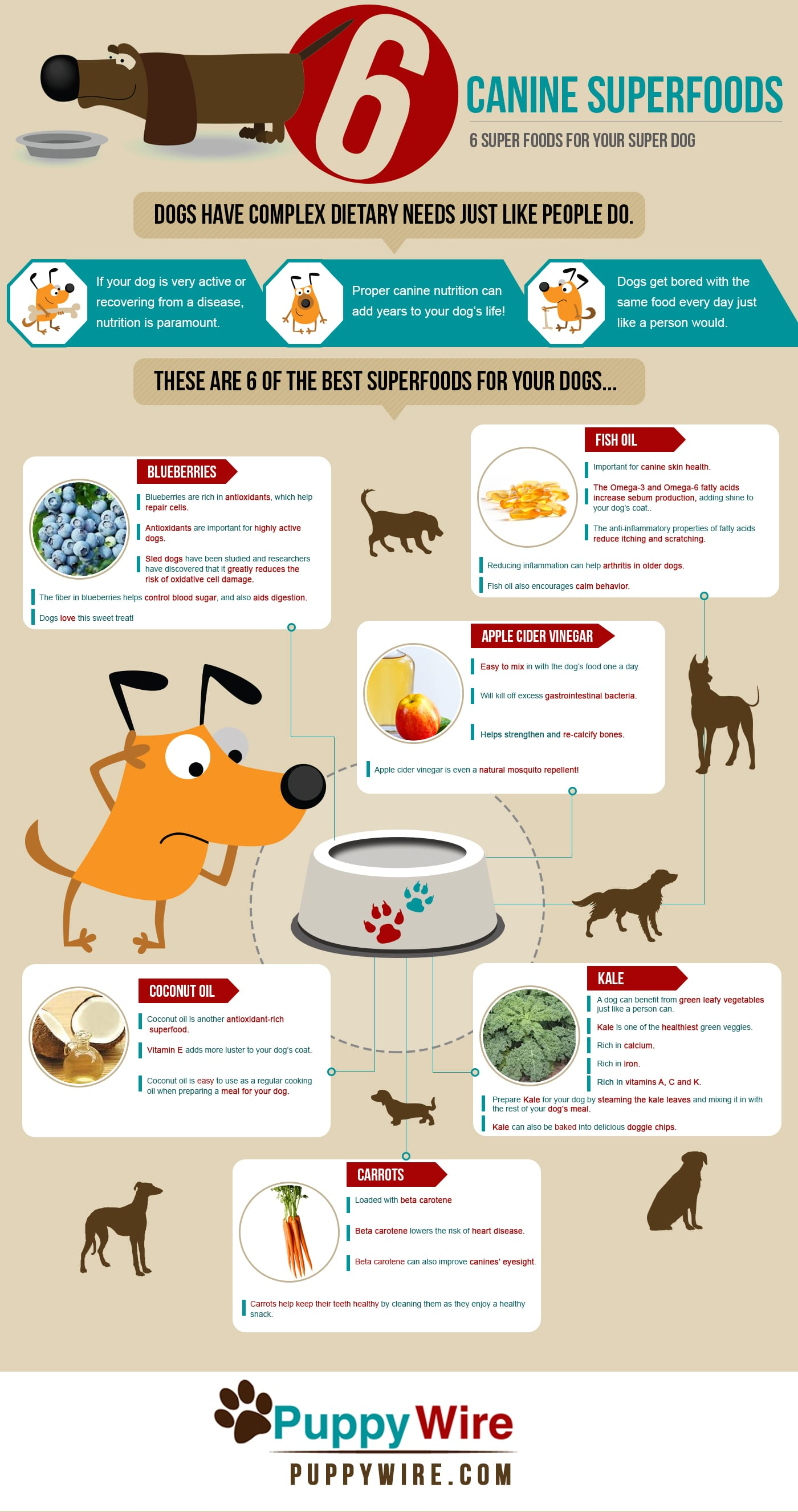 6 Superfoods for Your Super Dog Infographic