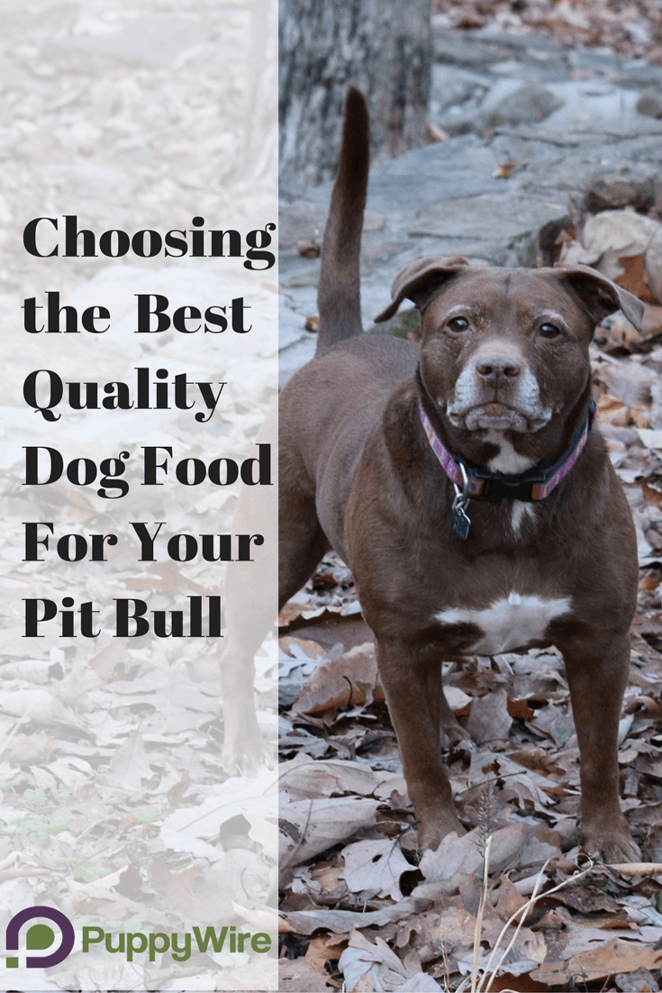 Click through to see our top picks for the best dog food for your Pitbull. We also explain the importance of proper nutrition and Pit bull specific nutrition advice.