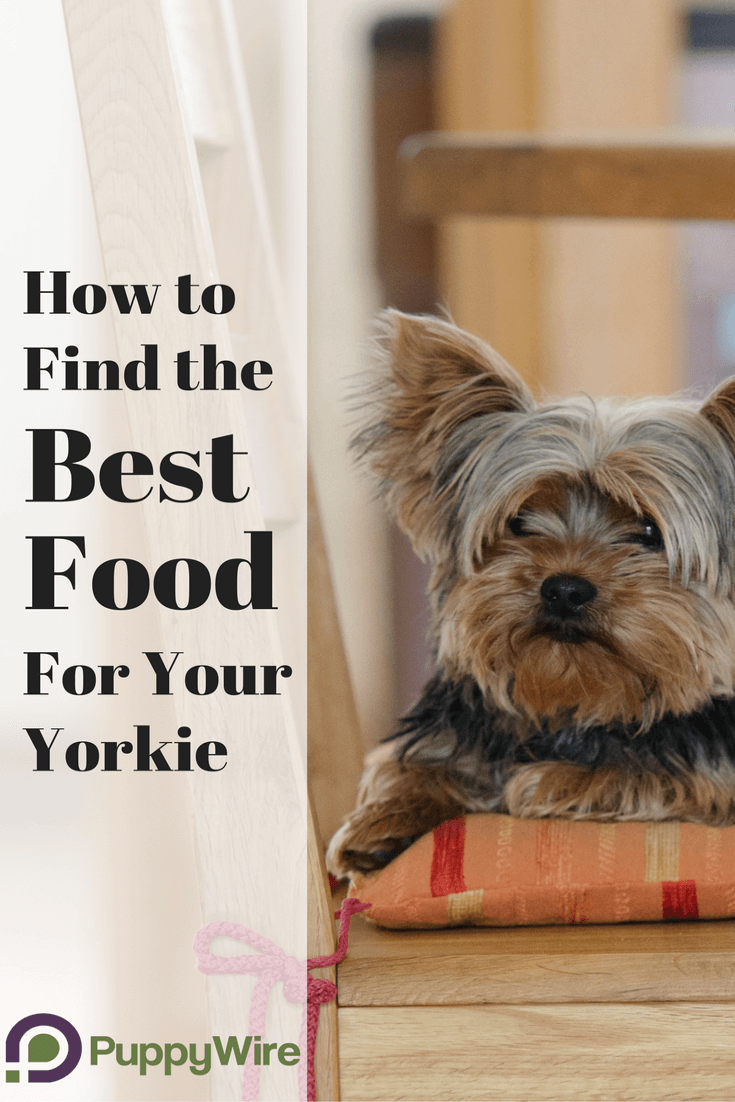 Finding the best dog food for Yorkies can be a challenge. We put together a valuable resource to help you to be able to pick the right food. Still not sure? We also put together our list of top 5 commercial dog foods for your Yorkshire Terrier.