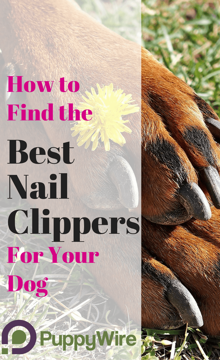 How to find the best dog nail trimming tools along with helpful dog nail trimming tips to help you turn this scary process into no big deal.