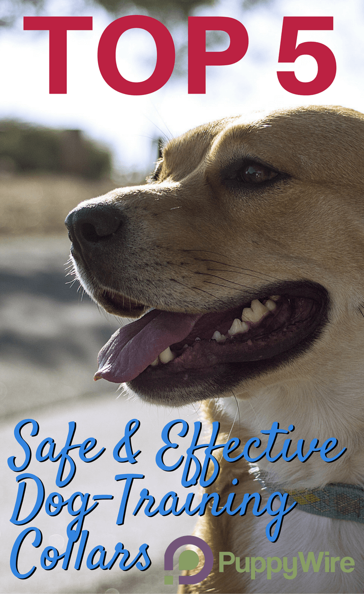 We cover the top 5 picks for high quality, safe and effective e collars for dogs. We also teach you what to look for and some dog training collar tips to use them safely.