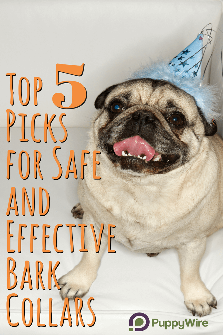 Read our in-depth guide to finding the best bark collar for your dog. We make sure you know what to look for so the anti bark collar you pick is safe and effective. We also cover bark collar reviews of our top 5 picks.