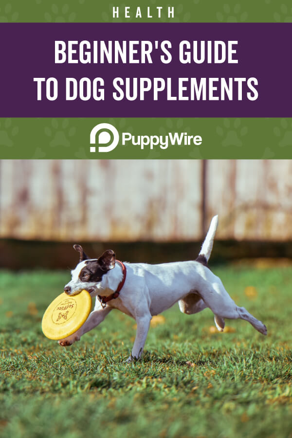 Dog Supplements 101 – Beginner's Guide to Canine Supplements