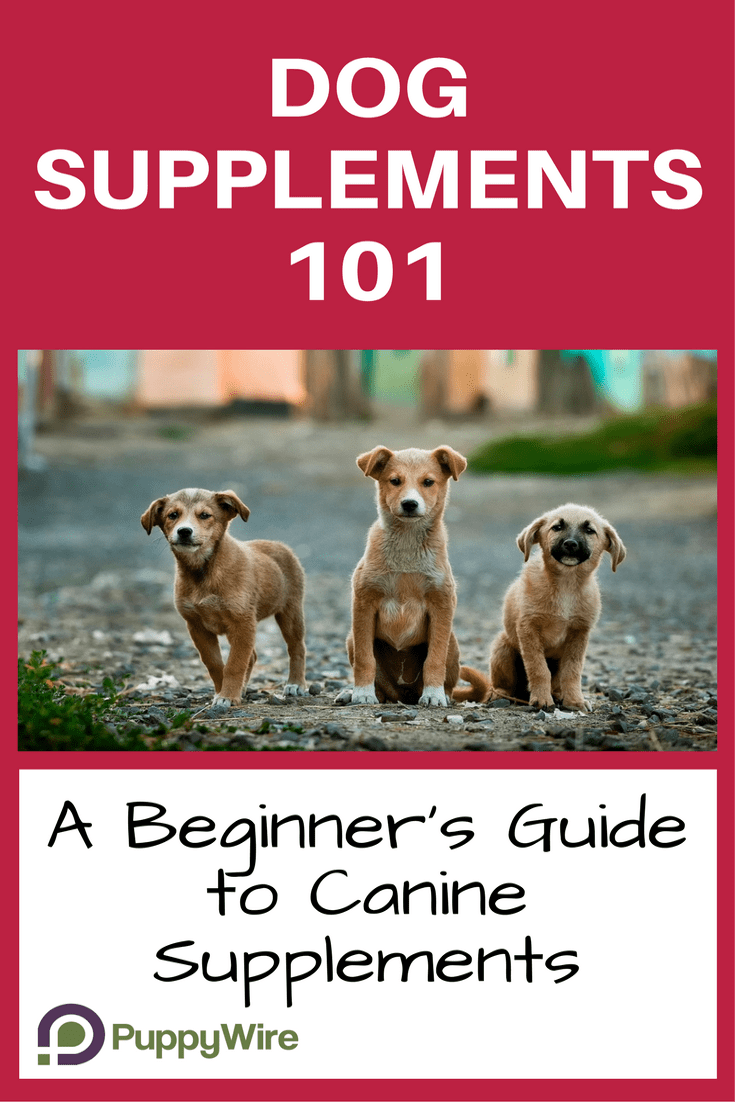 Dog Supplements 101 Beginner Guide To Canine Supplements
