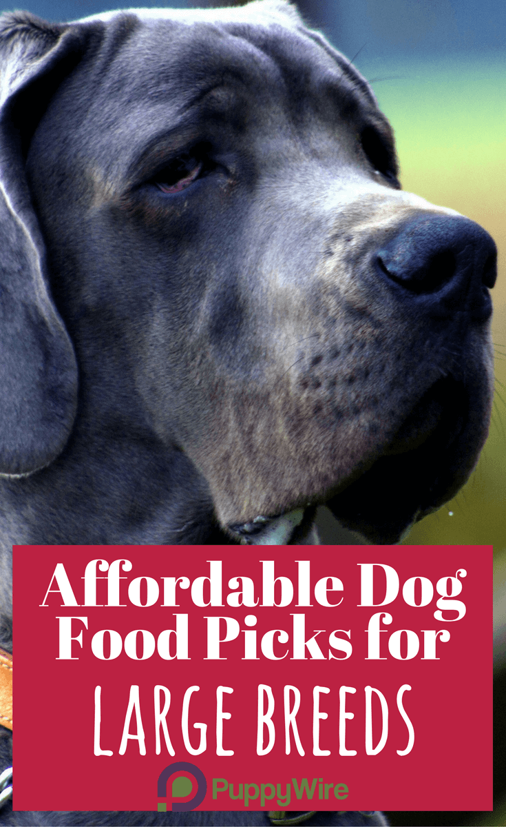Finding affordable large breed dog food can be a challenge? We put together our top 5 picks to help you find healthy, affordable food products for your large breed dog.
