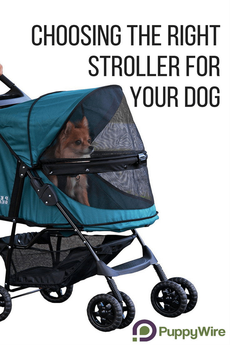 Find the best stroller for large and small dogs, best jogging dog stroller, double dog stroller, and even dog stroller bike trailers. Click through to see our top 5 picks and important information before accidentally buying the wrong one for your dog.