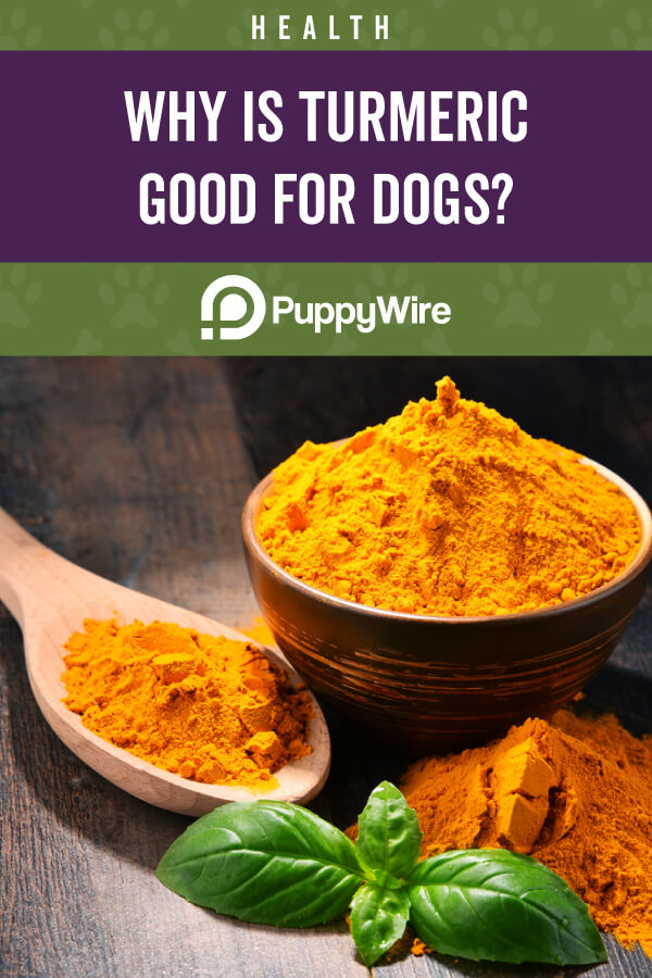 What You Should Know About Turmeric for Dogs