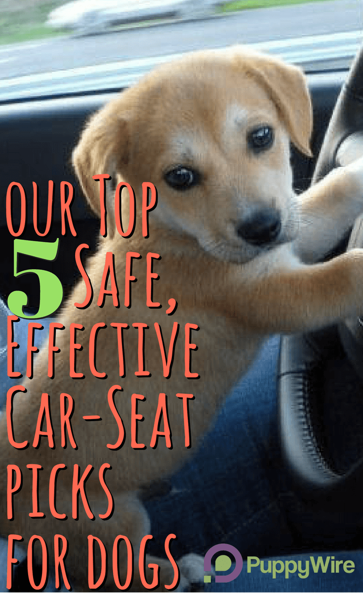 Pet Booster Seat >> Best Dog Car Seats: Top 5 Safe, Effective Picks & Reviews