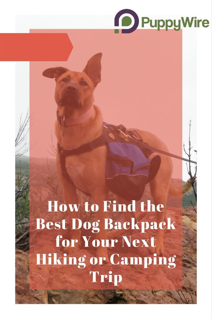 Helpful tips to finding the right dog saddlebag backpack for your dog and lists the top 5 picks for your next dog backpack for hiking or camping.