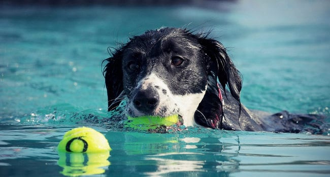 Dog engaging in Hydrotherapy