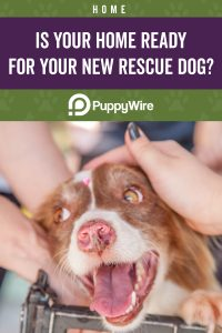 Is Your Home Ready for a Rescue Dog?