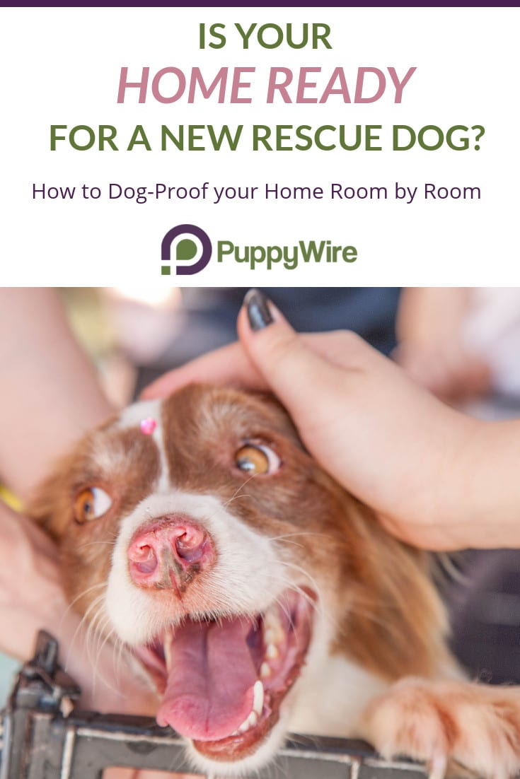 Dog proofing your home for a new dog is one of the most important aspects that is frequently forgot about. That's why we created this room by room guide to help you get started on the right foot with your new rescue.