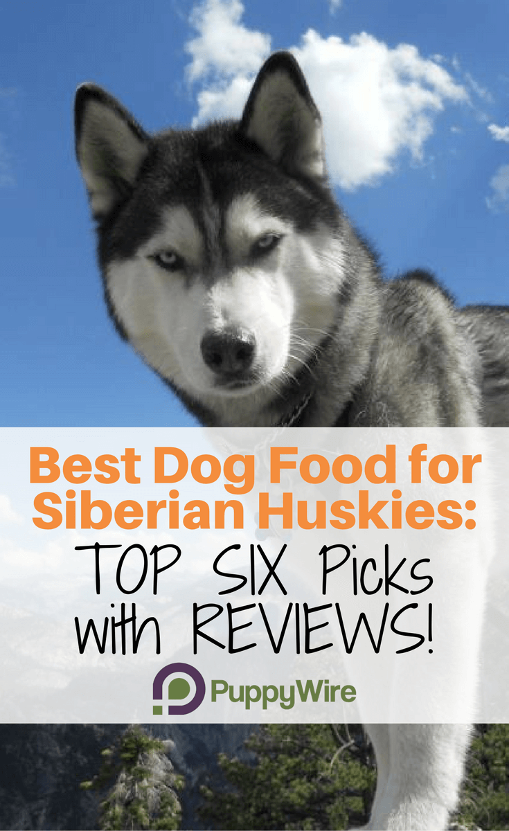 Dog Food For Huskies With Sensitive Stomach