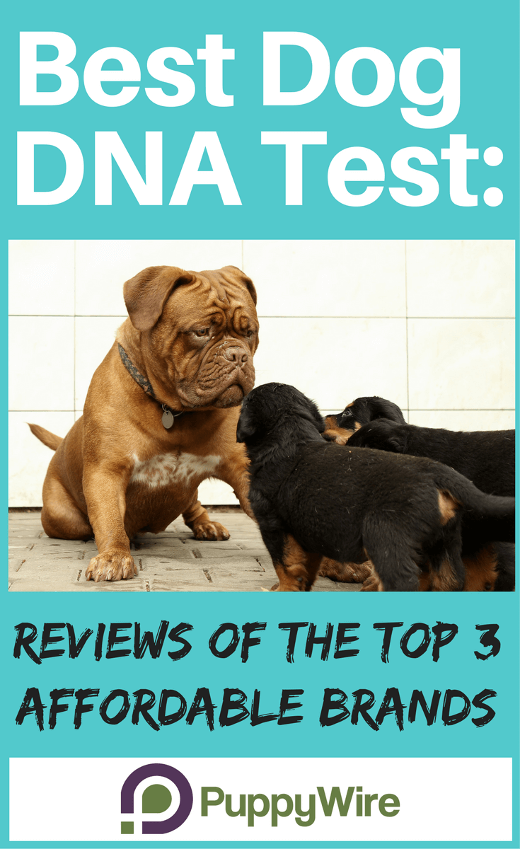 Finding a good reliable at home DNA test for your dog can be a challenge. We took the top 3 most popular product brands and put them to the test to find the best one that gives you the most accurate results.