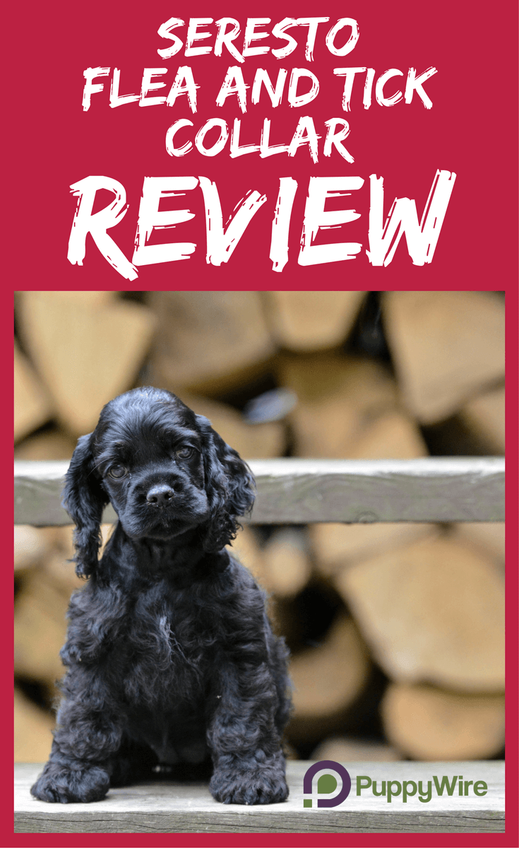 Seresto Flea and Tick Collar Review for both Small and Large Dogs. We cover how effective it is, any looming issues with it, and will it work on your dog.