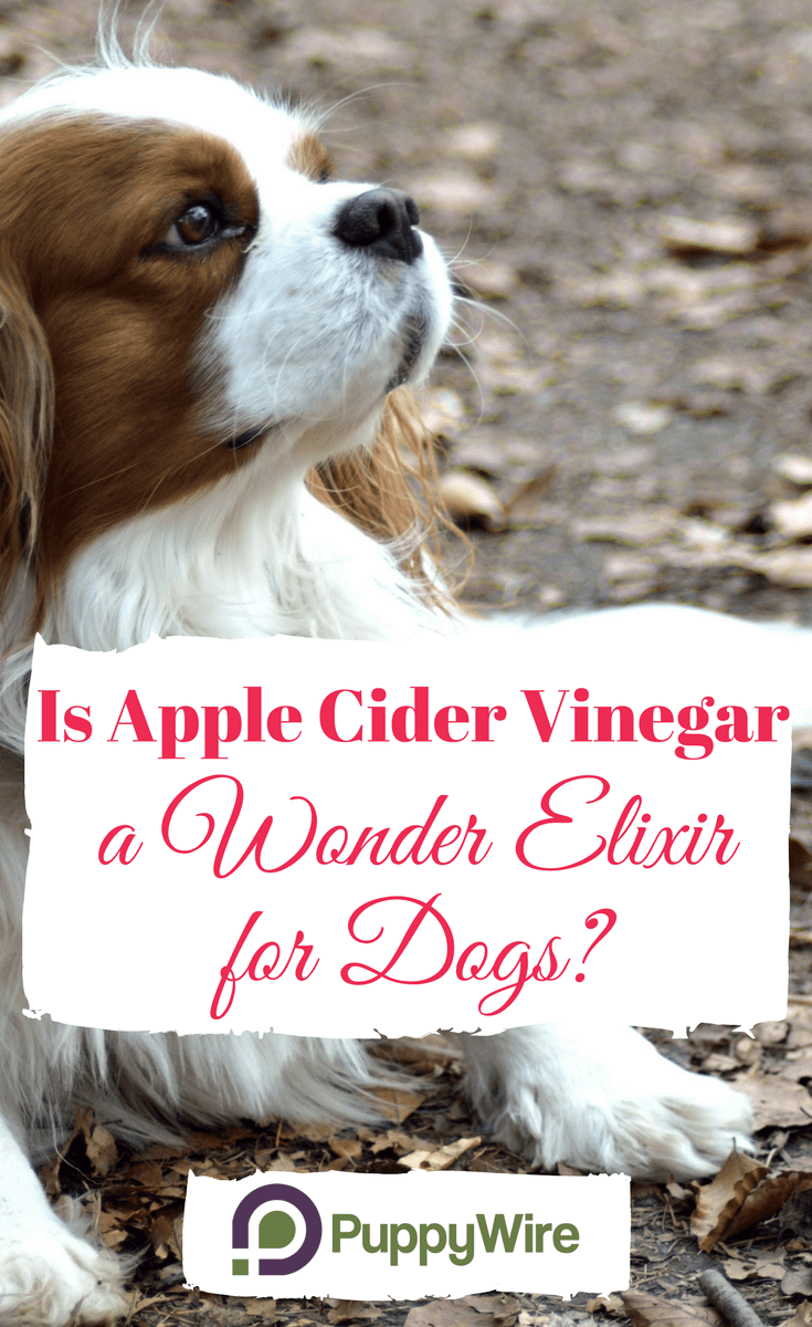 After hearing about apple cider vinegar for dogs and it's many uses (skin, repel fleas, ears, allergies, etc.). I decided to put together this huge resource for dog owners. It took a lot of time and if I happened to miss anything please let me know.