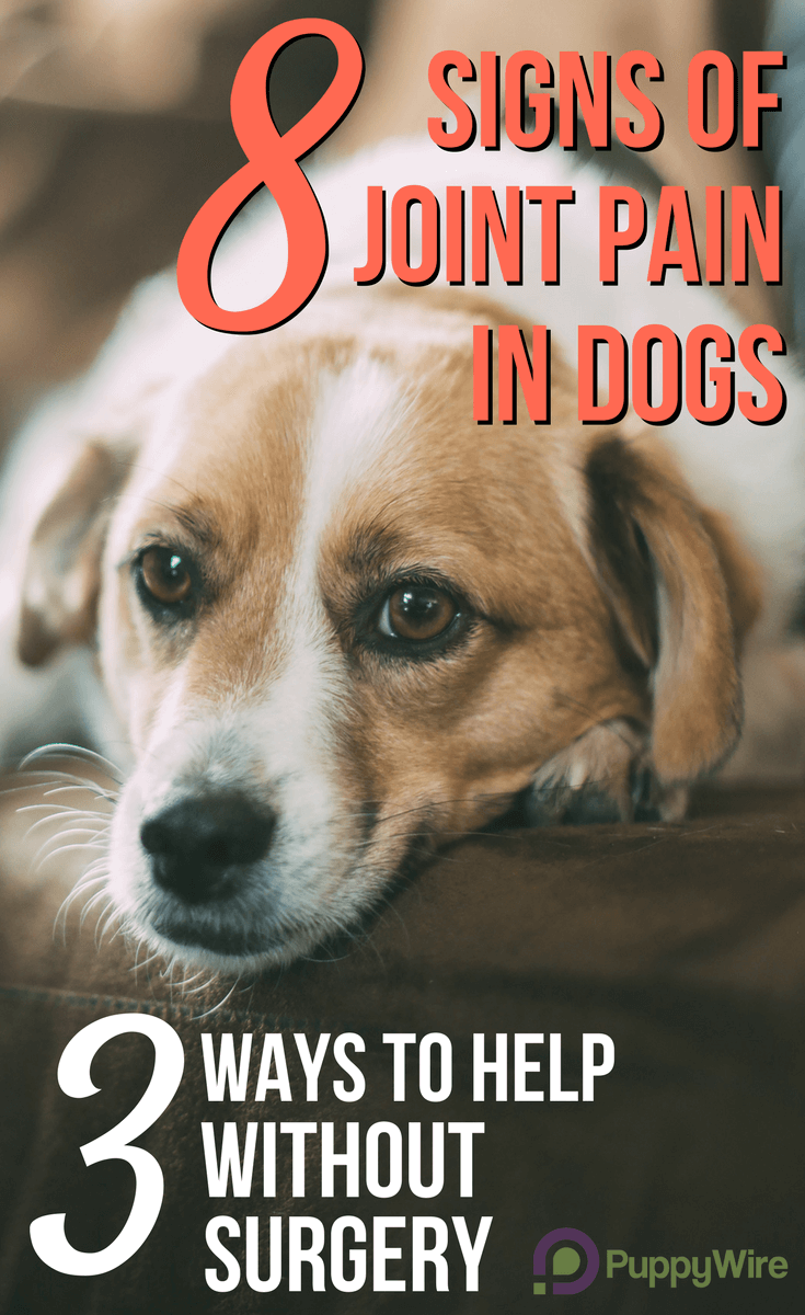 Please watch for these 8 signs of joint pain in dogs. The last thing we want is for your dog to be in pain without you knowing. Once you can recognize the signs there are 3 inexpensive ways to help (without resorting to surgery).