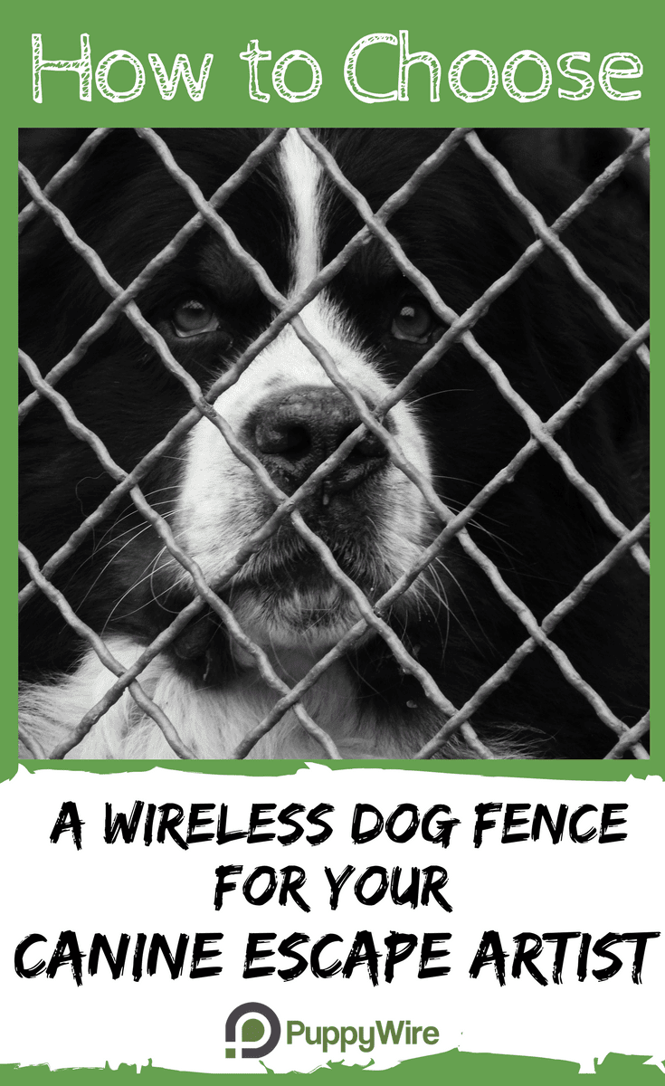 This article covers everything you need to know about choosing wireless dog fence products to keep your dog safe in your yard. It covers our top 4 picks, how they work, what you need to consider, and the differences between wire and wireless dog fence systems.