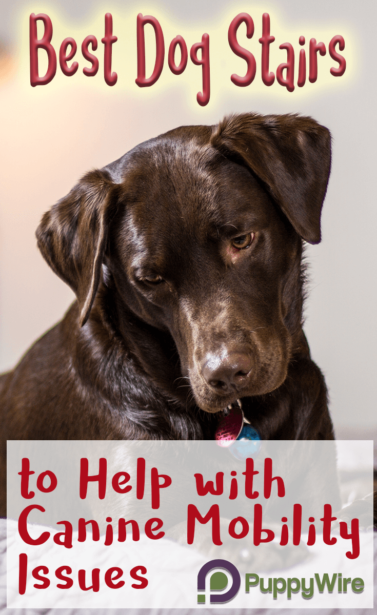 Looking for the best dog stairs for bed or couch? My senior dog has recently started needing dog steps for bed and couch so I put together a list of the top 5 I found.