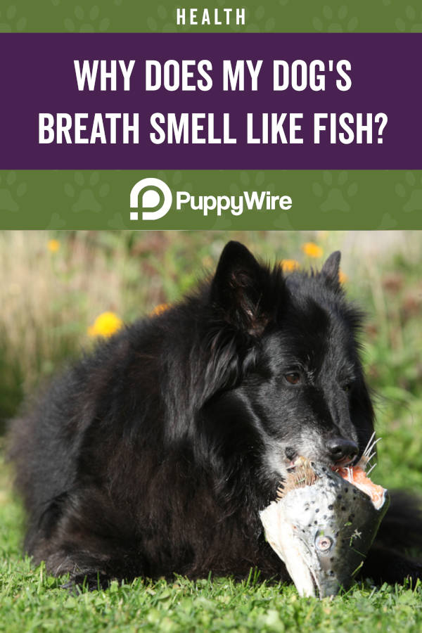Why Does My Dog's Breath Smell Like Fish?
