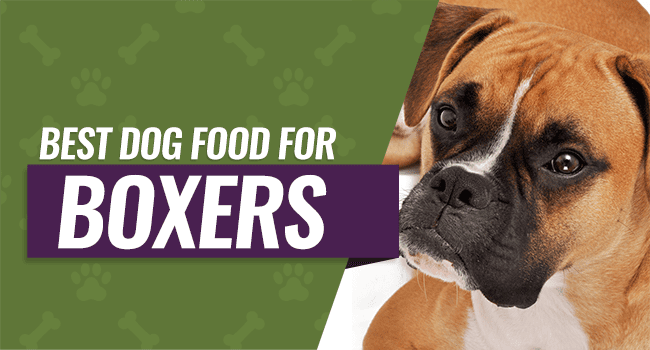 best-dog-food-boxers