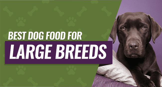 Top  Large Breed Dog Foods