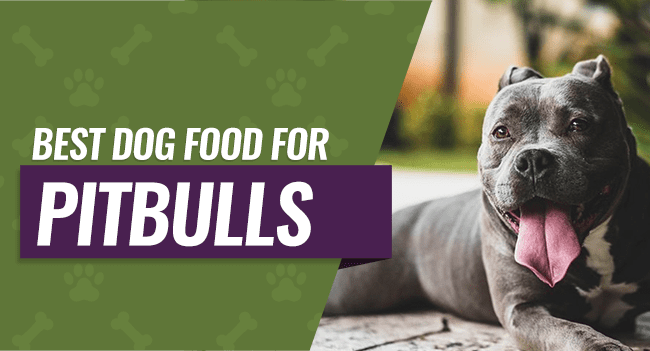 Best Dog Food For Pitbulls 8 Picks