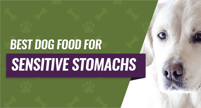 Best Dog Food For Sensitive Stomach And Gas