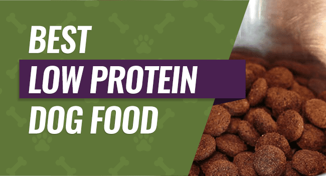 best-low-protein-dog-food