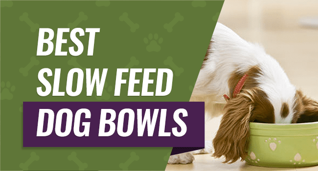 Dog Bowls To Slow Down Eating Stainless