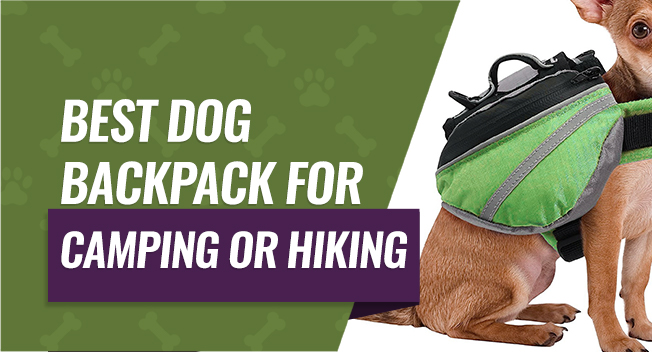 Best Dog Backpack for Camping or Hiking