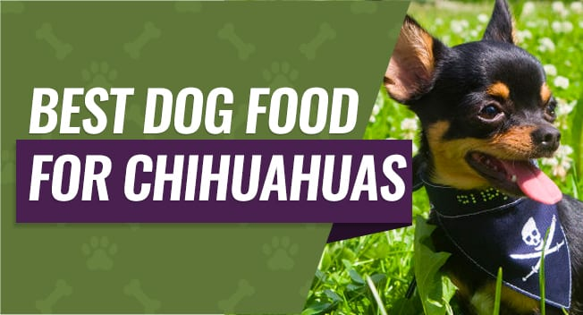 Best Dog Food For Chihuahuas 2019 Buyer S Guide Reviews