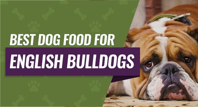 Best Dog Food For English Bulldogs Buying Guide Reviews