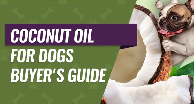 Coconut Oil for Dogs Buyer's Guide