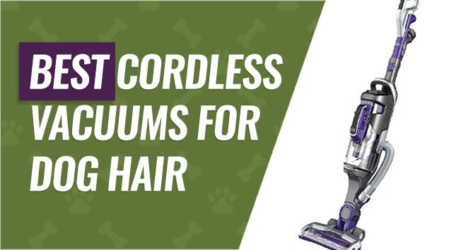 Cordless Vacuums to Pick Up Dog Hair