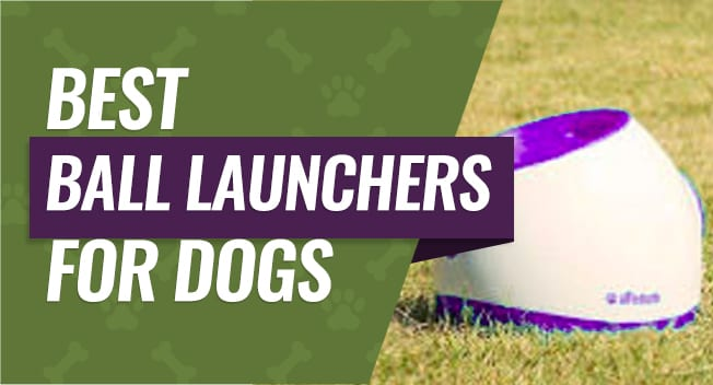Best Ball Launchers for Dogs