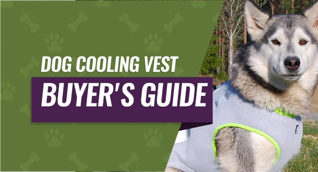 Dog Cooling Vest Buyer's Guide