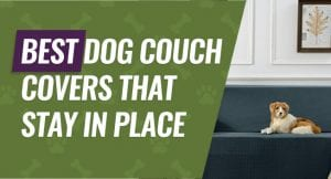 Covers to Protect Your Couch from Your Dog