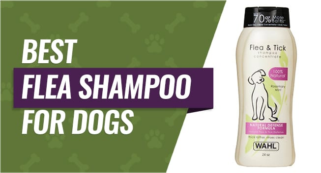 Top Rated Flea Shampoos for Dogs