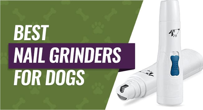 Top Grinders for Your Dog's Nails