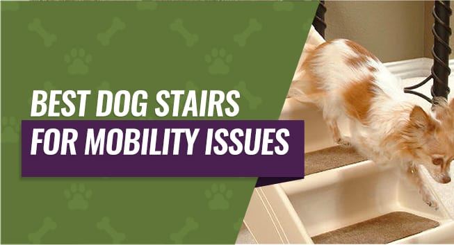 Dog Stairs for Mobility Issues