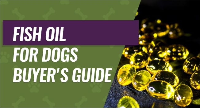 Fish OIl for Dogs Buyer's Guide