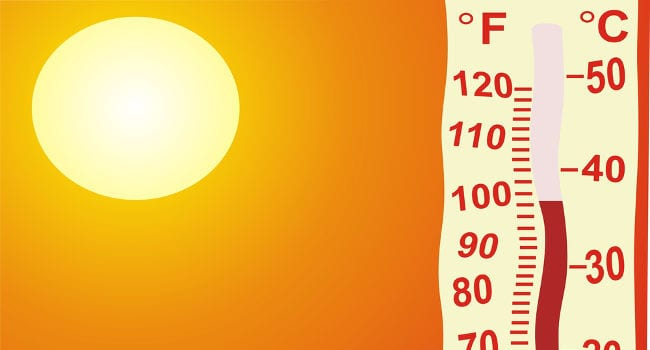 dog heat stroke survival guide