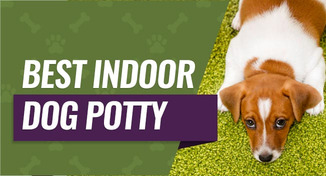 Best Indoor Dog Potty Top Choices For Small Amp Large Dogs