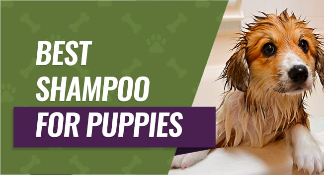 Top Rated Puppy Shampoos